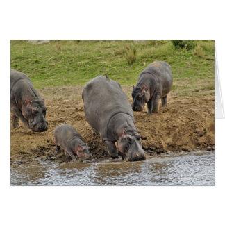 Hippopotamus, Hippopotamus amphibius, Serengeti Card