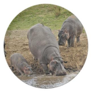 Hippopotamus, Hippopotamus amphibius, Serengeti Dinner Plate