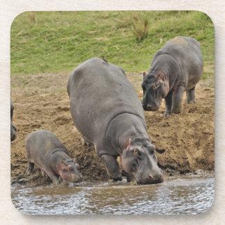 Hippopotamus, Hippopotamus amphibius, Serengeti Drink Coasters