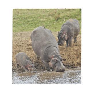 Hippopotamus, Hippopotamus amphibius, Serengeti Memo Notepads