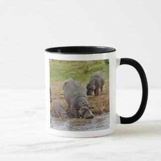 Hippopotamus, Hippopotamus amphibius, Serengeti Mug