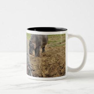 Hippopotamus, Hippopotamus amphibius, Serengeti Coffee Mugs