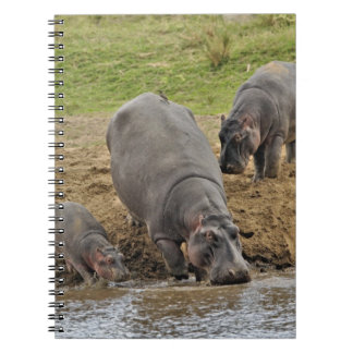 Hippopotamus, Hippopotamus amphibius, Serengeti Spiral Notebooks
