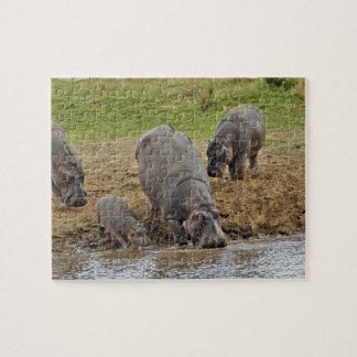 Hippopotamus, Hippopotamus amphibius, Serengeti Puzzle