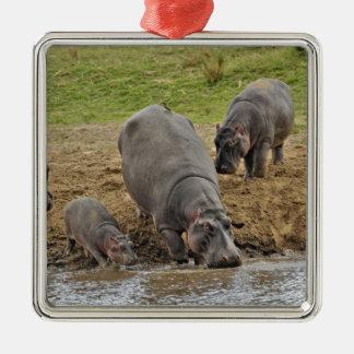 Hippopotamus, Hippopotamus amphibius, Serengeti Silver-Colored Square Decoration