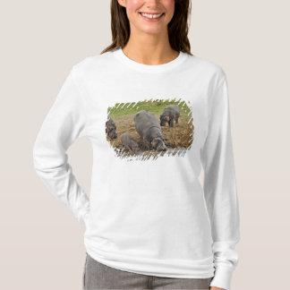 Hippopotamus, Hippopotamus amphibius, Serengeti T-Shirt