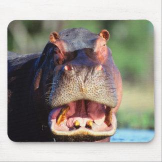 Hippopotamus (Hippopotamus Amphibius) Threat Mouse Mat