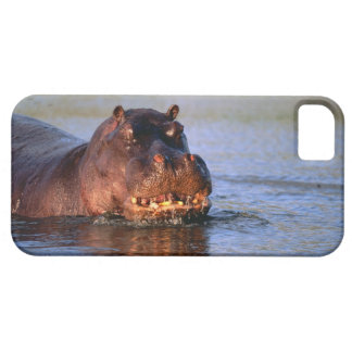 Hippopotamus in River Case For The iPhone 5