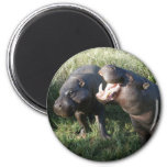 Hippopotamus Magnets