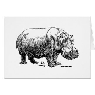 Hippopotamus Note Card