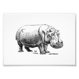 Hippopotamus Photographic Print