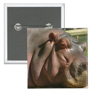 Hippopotamus Square Pin