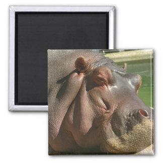Hippopotamus Square Pin Magnet