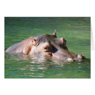 Hippopotamus Swimming On The Surface Card