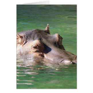 Hippopotamus Swimming On The Surface Card