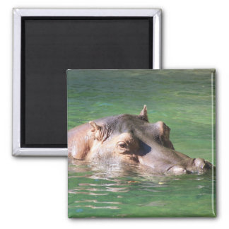 Hippopotamus Swimming On The Surface Magnet