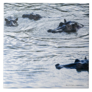 Hippopotamuses wading in a river, Africa Tile