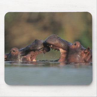Hippos (Hippopotamus Amphibius) Wrestling Mouse Mat