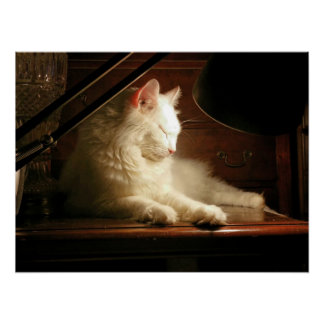 His Majesty Matisse the White Cat Poster