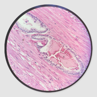 Histology Tissue Microscopic Photography sticker