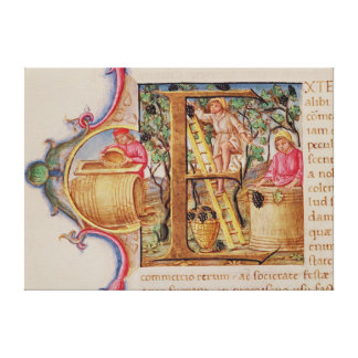 Historiated initial 'E' depicting grape picking Canvas Print