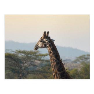 Hitching a ride on a giraffe postcard