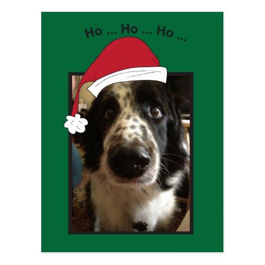 Ho Ho Ho Doggie Postcard