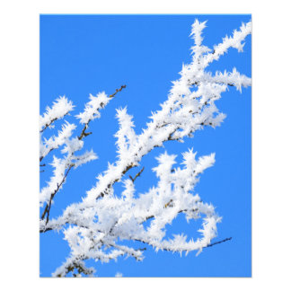 hoarfrost-639980 NATURE PHOTOGRAPHY HOARFROST BLUE 11.5 Cm X 14 Cm Flyer