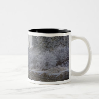 Hoarfrost along a slough at the Kelly Island Two-Tone Coffee Mug