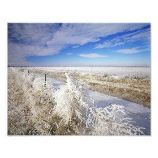 Hoarfrost coats tumbleweed and fenceline near photographic print