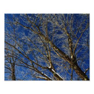Hoarfrost Trees - Pushaw Stream Art Photo