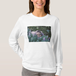 Hoary marmot feeding on silky lupine, Exit T-Shirt