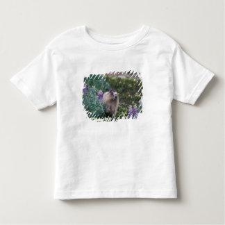 hoary marmot, Marmota caligata, feeding on silky Toddler T-Shirt