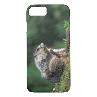 hoary marmot, Marmota caligata, scratches iPhone 8/7 Case