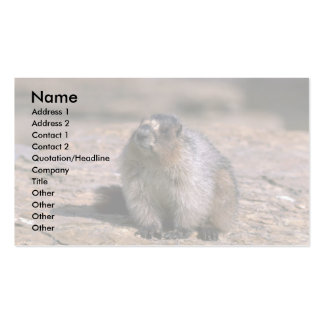 Hoary Marmot Pack Of Standard Business Cards