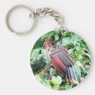 "Hoatzin ""Stinky Turkey""  Pastaza River, Ecuadorean Basic Round Button Key Ring"