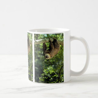 Hoffmann's two-toed sloth coffee mug