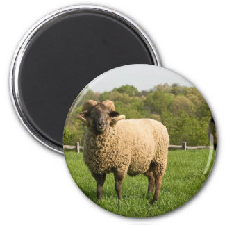 Hog Island Sheep Magnet