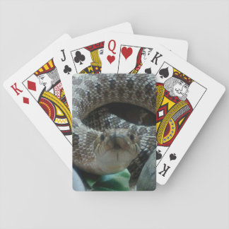 Hognose Playing Cards