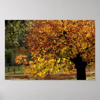 Hojas doradas del castaño en otoño en la sierra posters
