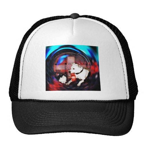 hokey dog and cat mesh hats