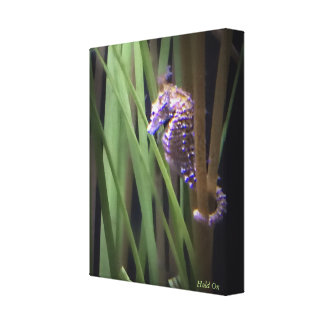 Hold On - Baby Seahorse Canvas Print