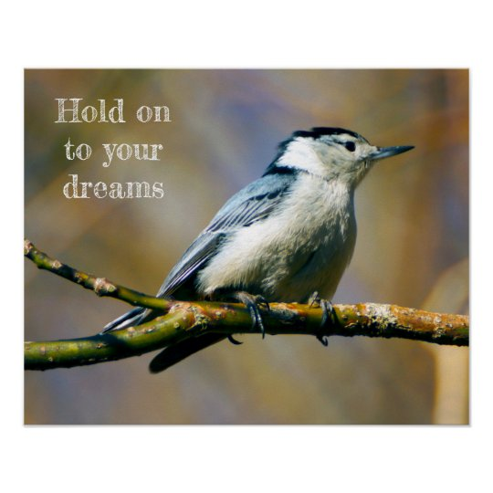 Hold on to Dreams White-Breasted Nuthatch Poster