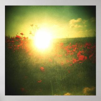 Holga poppy sunrise print
