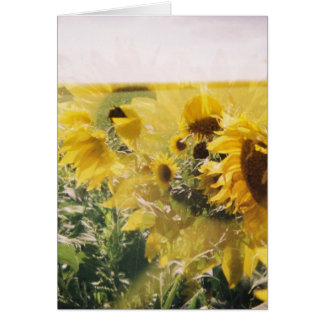 holga sunflowers: retro dreamy vibe cards
