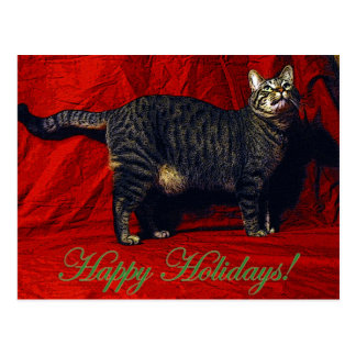 Holiday Cat - postcard