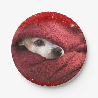 Holiday Chihuahua Paper Plate