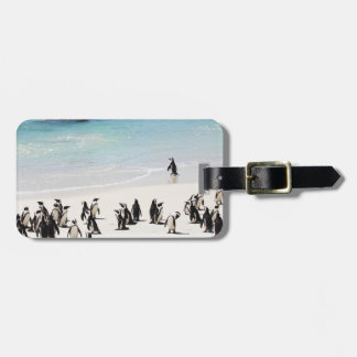 Holiday For Penguins Luggage Tag