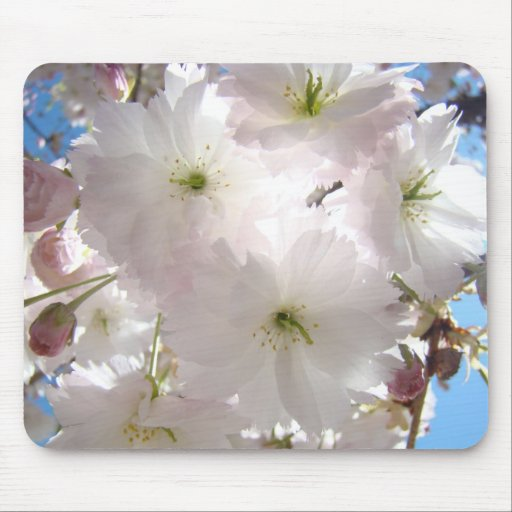 HOLIDAY Gift MOM Pink Blossoms Spring Mouse pad