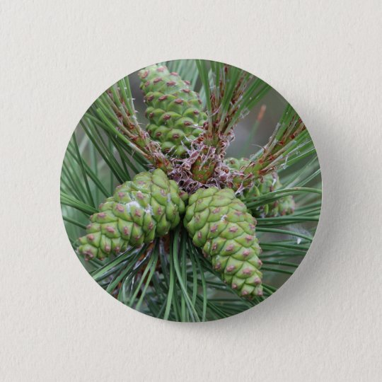 Holiday Pine Cones 6 Cm Round Badge